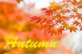 秋のメンズファッション